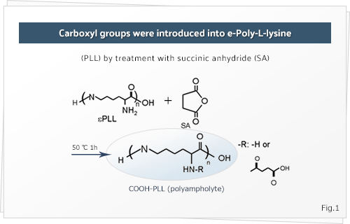 Carboxyl groups were introduced into e-Poly-L-lysine