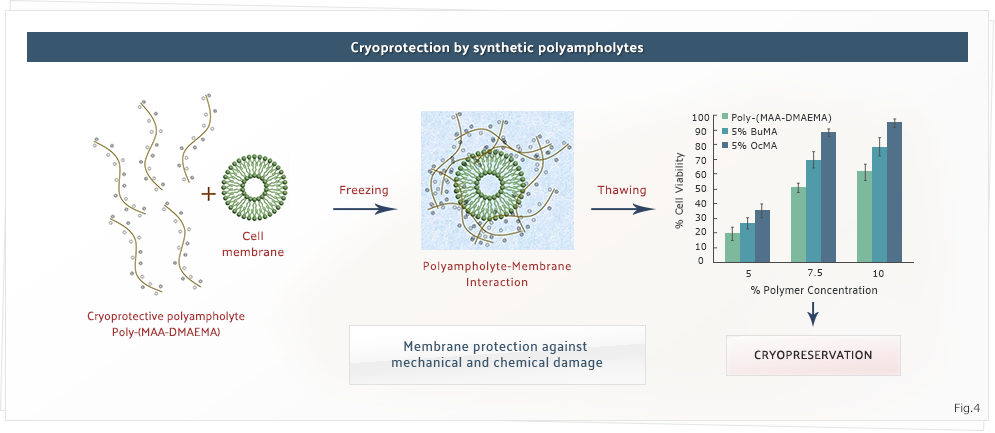 Cryoprotection by synthetic polyampholytes