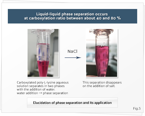 Liquid-liquid phase separation occurs at carboxylation ratio between about 40 and 80 %